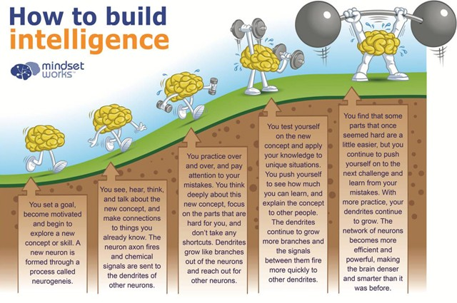 How To Grow Your Intelligence Graphic